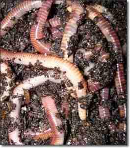 teetatwormfarm