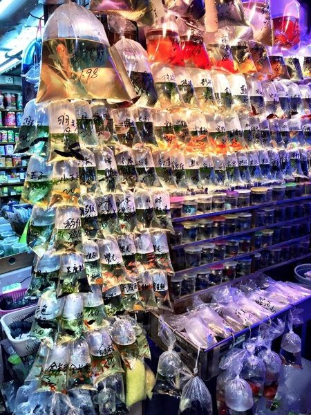Hong Kong Fish Store Bagged Fish