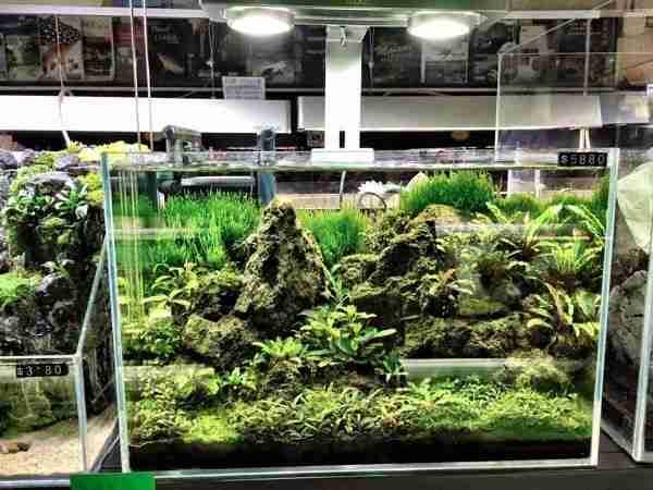 Hong Kong Fish Store Display Tanks