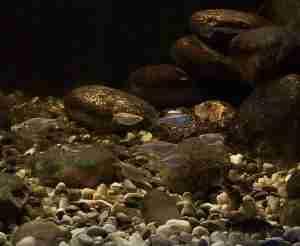 Koyna and Krishna River Confluence Aquarium