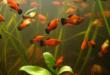 Aquarium offerings
