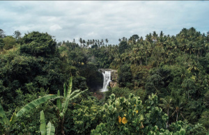 Plants provide much needed habitat