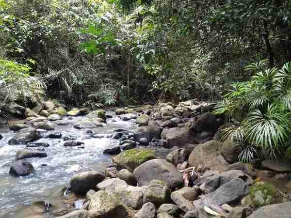 Biotope of East Kalimantan, Indonesia