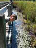 Mer Bleue Conservation Area Sphagnum Peat Bog