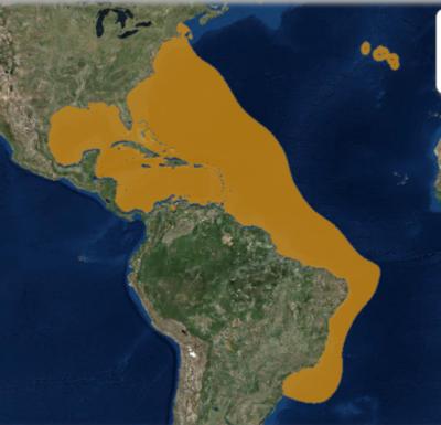 IUCN Range Map for Hippocampus erectus