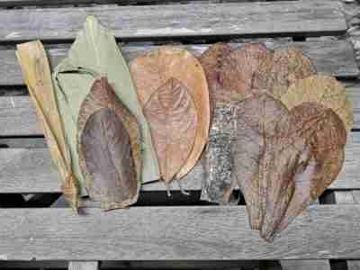 Ketapang Botanicals Leaf Litter