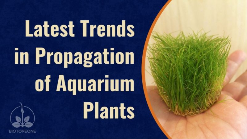 Latest Trends in Propagation of Aquarium Plants
